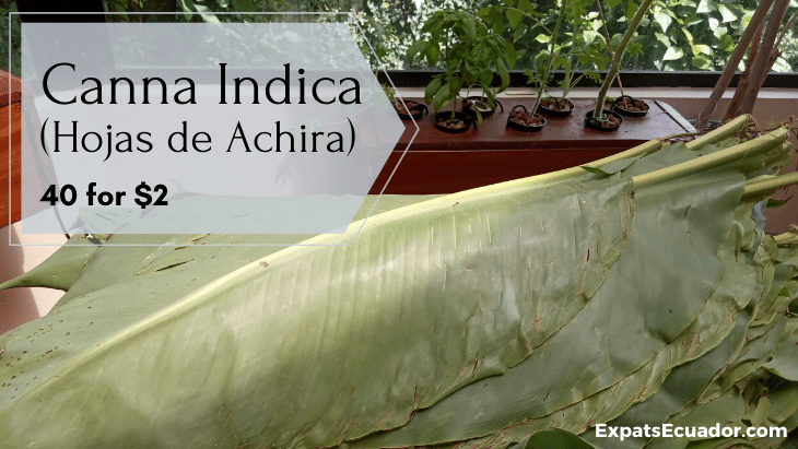 Canna Indica Leaves (Hojas de Achira) Cost