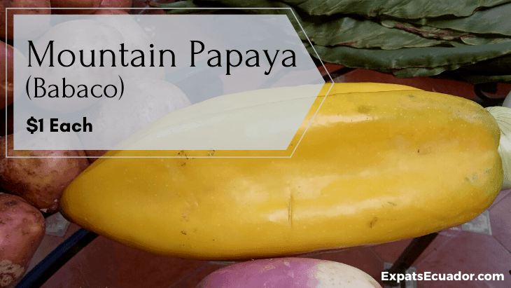 Mountain Papaya (Babaco)