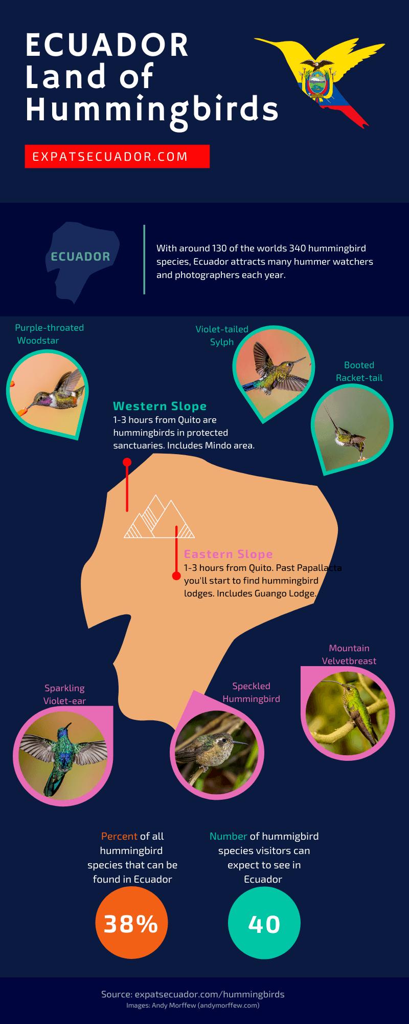 Ecuador Hummingbird Infographic