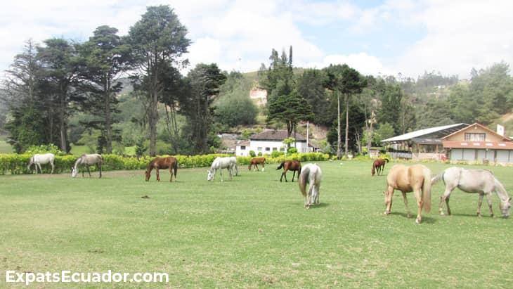 Centro Ecuestre Bellavista Stables Horses