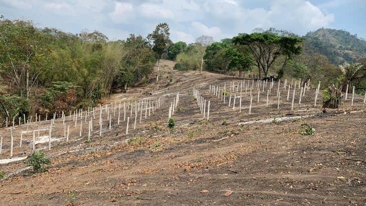 Planting Dragonfruit in Manabi, Ecuador