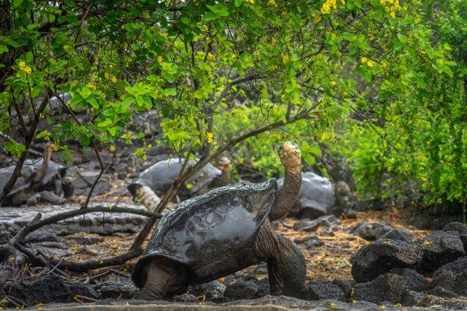 Tortoises chilling